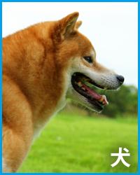 犬によくある病気