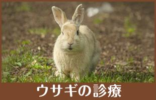 ウサギの診療