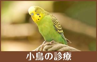 小鳥の診療